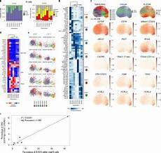 mapping systemic lupus erythematosus heterogeneity at the