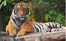 Menteri Beri Amaran Harimau Malaya Mungkin Pupus 5 Hingga