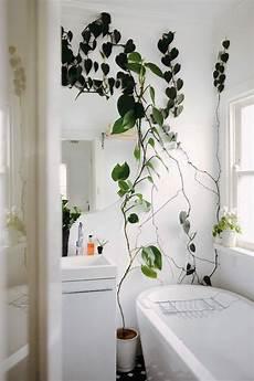 eine entspannende badezimmergestaltung mit pflanzen f 252 rs
