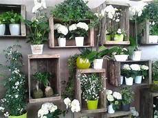 caisses et plantes vertes crates and plants crates