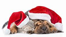 10 ways to have a merry christmas with pets