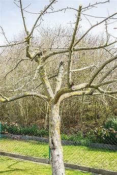 Taille Des Arbres Fruitiers Pommier Poirier Cerisier
