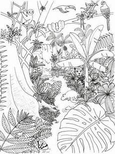 rainforest coloring page rainforest alliance