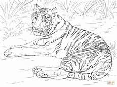 siberian tiger laying coloring page free printable