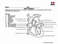 heart diagram and cell worksheet by family 2 family
