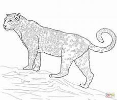 jaguar big cat coloring page free printable coloring pages