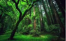 Hutan Paru Paru Dunia Yang Terlupakan Kompasiana