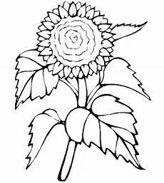 Malvorlagen Sonnenblumen Ausdrucken Kostenlose Malvorlagen Sonnenblumen Coloring And Malvorlagan