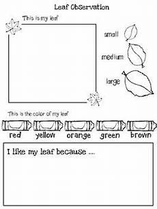 science worksheets leaves 12281 leaf observation by ms brunners kindergarten teachers pay teachers