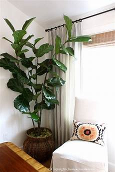 Home Decor Ideas Plants by Six Easy Care Indoor Plant Ideas Classic Casual Home