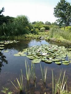 Was Ist Ein Teich - tr 252 ber gartenteich gartenteich planung bau und pflege