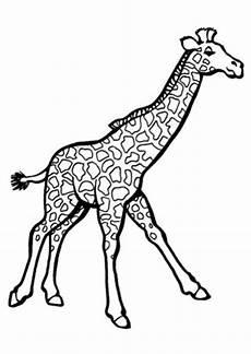 ausmalbilder giraffe 2 giraffen malvorlagen