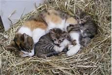 Malvorlage Katze Mit Jungen Haflinger Katzen
