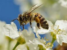 Hebatnya Lebah Madu Bisa Pecahkan Soal Matematika