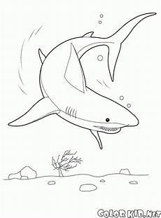 Malvorlage Hai Einfach Malvorlagen Hai