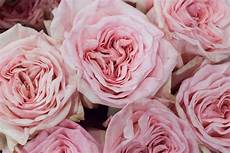 pink o hara roses at new covent garden flower market august 2015 pink is my signature color