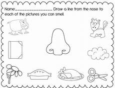 5 senses preschool printables the pre k classroom my 5 senses unit and a freebie