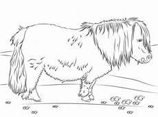 Ausmalbilder Pferde Ponys Shetland Pony Coloring Page Free Printable Coloring