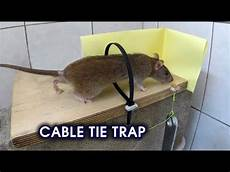 how to make a simple coat hanger humane mousetrap that