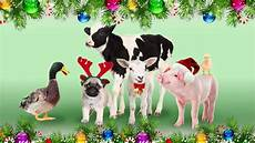 merry from the animals