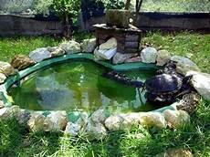 vasche x tartarughe d acqua tartarughe d acqua dolce guida alle specie habitat