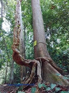 Port Dickson Bercuti Sambil Belajar Mengenai Alam Di Eco