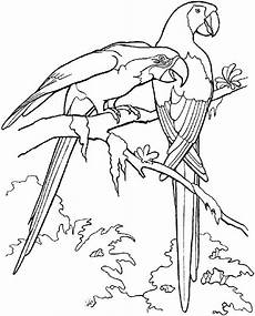 realistic parrot coloring pages at getcolorings free