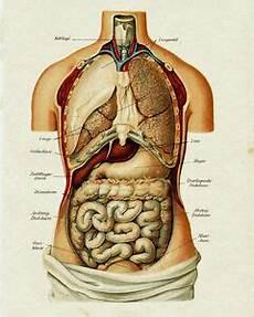 Vintage Anatomy Human Organ Illustration Chart