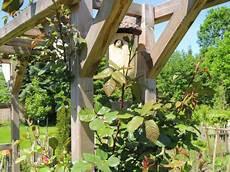 katzenabwehrgürtel selber bauen der garten des gl 252 cks oder g 228 rtnern f 252 r das naturparadies
