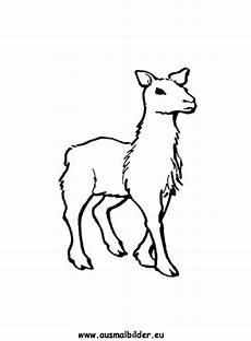 ausmalbild lama zum ausdrucken