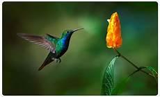 Malvorlage Vogel Mit Blume Kolibri Vogel Bird Blume Flower Wandtattoo Wandsticker