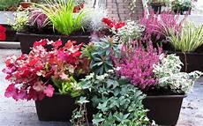 herbstblumen balkon winterhart bepflanzter balkonkasten 60 cm wintergr 252 n herbstblumen