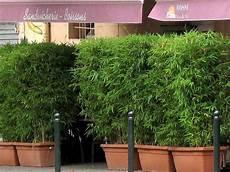 Sichtschutz Terrasse Bambus - garten moy bambus als sichtschutz fuer terasse und balkon
