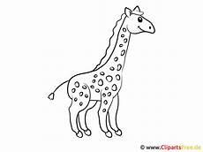 Malvorlagen Kostenlos Giraffe Vorlage Ausmalbilder Giraffe