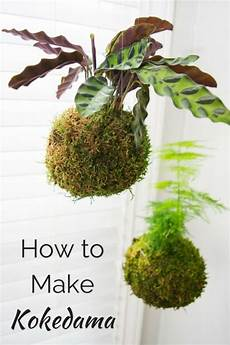 indooroutdoor hanging moss balls filled with plants how to make kokedama japanese moss hanging plants
