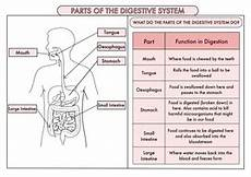 year 8 science worksheets uk 12434 science poster pack on the digestive system and teeth for year 4 teaching resources
