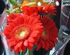 fiori e fiori recisi e al mazzo fiorito