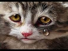 Gambar Kucing Sedih Status Wa Galau