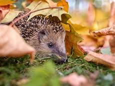 Malvorlagen Igel Herbst Winter Tiere Im Winter