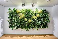 green walls moss walls