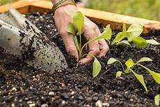 Hochbeet Bepflanzen Im August 187 Diese Pflanzen Kommen Infrage