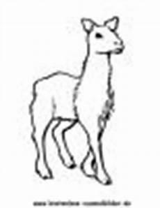 Malvorlagen Kostenlos Lama Kostenlose Ausmalbilder Ausmalbild Lama