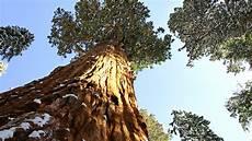 eqoi7a sequoia forest s majesty
