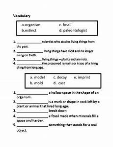 fossils assessment 3rd grade science by cammie s corner tpt