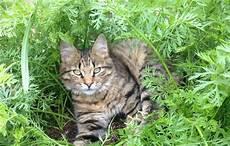 katzen artgerecht vom garten fernhalten agila
