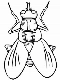 insects coloring pages getcoloringpages