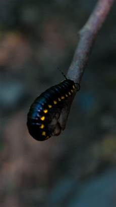Insect Caterpillar Wallpaper by Caterpillar Insect Color Blur Wallpaper 2160x3840