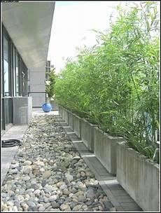 Sichtschutz Pflanzen Balkon