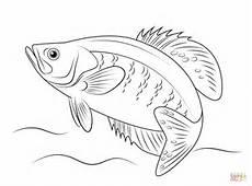Malvorlagen Fische Hecht Einzigartig Ausmalbilder Fische Zum Ausdrucken Top