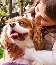 famille d accueil pour chien pendant les vacances faire garder chien pendant les vacances gamm vert